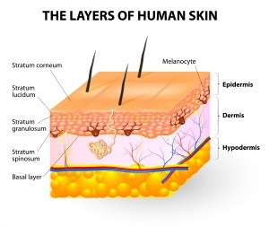 Melanocyte and melanin. layers of epidermis. Melanocytes produce the pigment melanin, which they can then transfer to other epidermal cells. Melanin can be yellow, brown, or black in color, and the more of it that is produced by melanocytes, the darker is the skin.